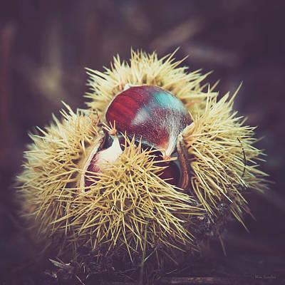 Photograph - Sweet Chestnut by Wim Lanclus