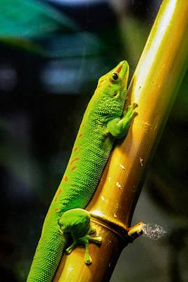 Photograph - Sweet Day Gecko Sunbathing by Bonnie Follett
