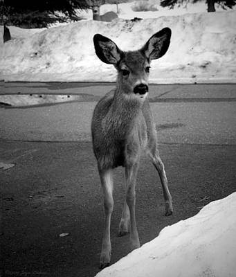 Photograph - Sweet Deer Of Sisters Oregon B And W by Joyce Dickens