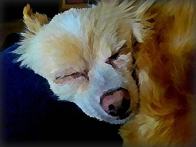 Pet Wall Art - Digital Art - Sweet Dreams by Raven Hannah