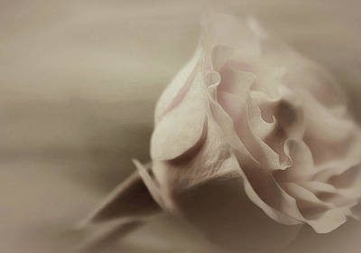 Eternally Photograph - Sweet Eternally by The Art Of Marilyn Ridoutt-Greene