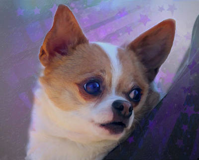 Digital Art - Sweet Face Chihuahua by Posey Clements