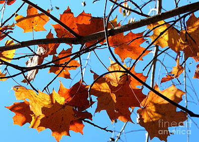 Photograph - Sweet Fall by France Laliberte