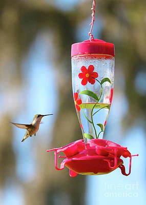 Photograph - Sweet Florida Hummingbird by Carol Groenen