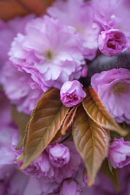 Photograph - Sweet Fragrance Of Spring. Spring Pastels by Jenny Rainbow