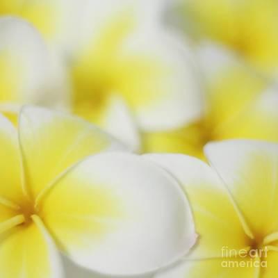 Plumeria Photograph - Sweet Fragrance Of Yellow by MingTa Li