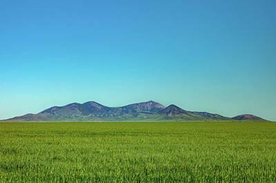 Photograph - Sweet Grass Green by Todd Klassy