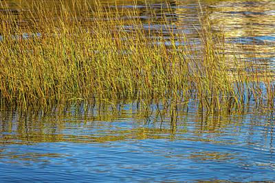 Photograph - Sweet Grass  by Menachem Ganon