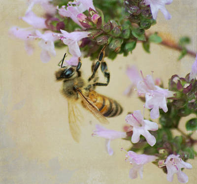 Photograph - Sweet Honeybee by Marilyn Wilson