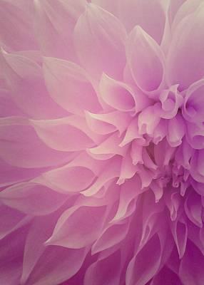 Hope Photograph - Sweet Hope by The Art Of Marilyn Ridoutt-Greene