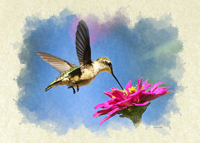 Photograph - Sweet Hummingbird Blank Note Card by Christina Rollo
