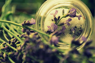 Photograph - Sweet Lavender by Marija Djedovic