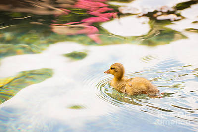 Photograph - Sweet Little Duckling by MaryJane Armstrong