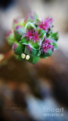 Photograph - Sweet Little Flower by Lainie Wrightson