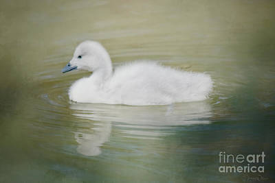 Photograph - Sweet Little Gosling by Teresa Wilson