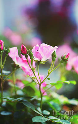 Photograph - Sweet Love, Pink Roses - Georgia by Adrian DeLeon