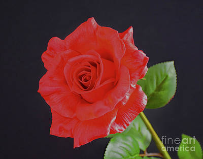 Wedding Flowers Ideas Photograph - Sweet Love by Ray Shrewsberry