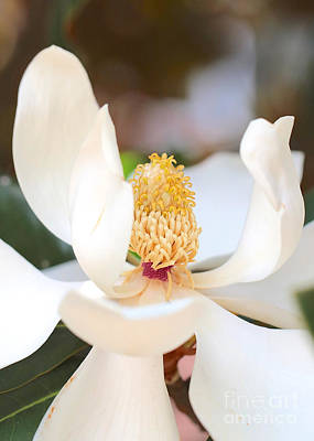 Photograph - Sweet Magnolia Center by Carol Groenen