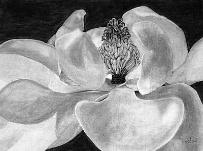 Christina Drawing - Sweet Magnolia by Christina Steward