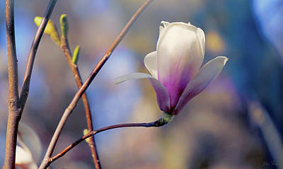 Photograph - Sweet Magnolia by John Rivera
