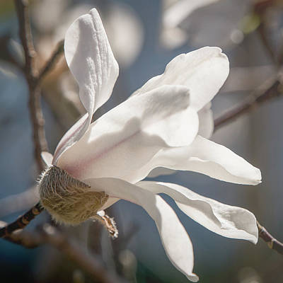 Photograph - Sweet Magnolia by Teresa Wilson