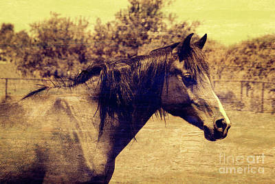 Photograph - Sweet Mare Sepia Texture by Jim And Emily Bush