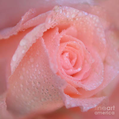 Photograph - Sweet Memories In Pink by Olga Hamilton