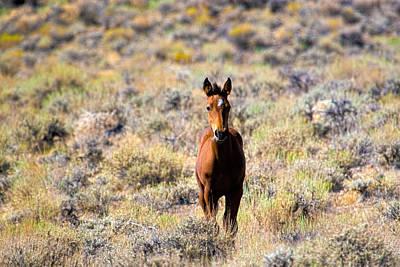 Photograph - Sweet Mustang Foal by Waterdancer
