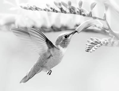 Photograph - Sweet Nectar Bw by Athena Mckinzie