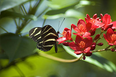 Art Print featuring the photograph Sweet Nectar by Carolyn Marshall