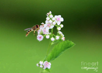 Photograph - Sweet Nectar by Mariarosa Rockefeller