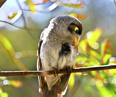 Photograph - Sweet Noisy Miner by Miroslava Jurcik