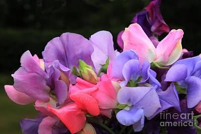 Sweet Pea Floral Art Print