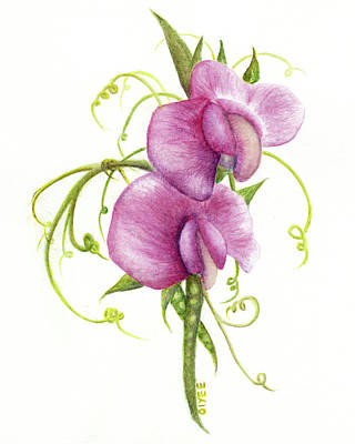 Painting - Sweet Pea by Oiyee At Oystudio