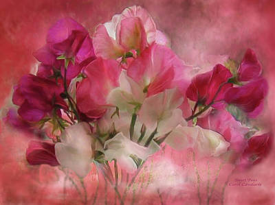 Sweet Peas Art Print by Carol Cavalaris