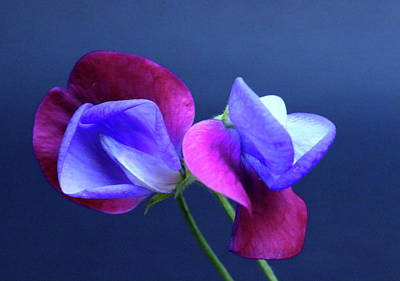Nighttime Street Photography - Sweet Peas by Jeff Townsend