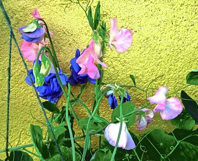 Photograph - Sweet Peas by Stephanie Moore