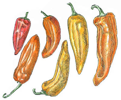 Drawing - Sweet Peppers by Dominic White