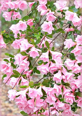 Photograph - Sweet Pink Azaleas by Carol Groenen