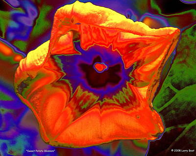 Digital Art - Sweet Potato Blossom by Larry Beat