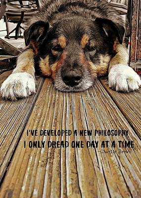 A Dogs Life Quote Art Print by JAMART Photography