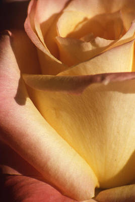 Photograph - Sweet Rose by Gary Brandes
