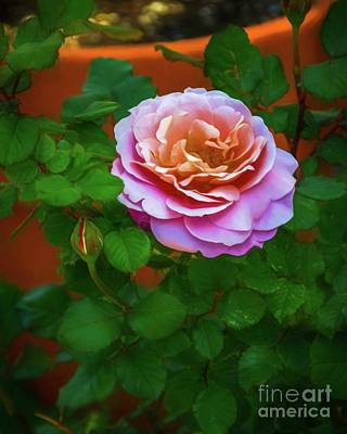 Photograph - Sweet Rose by Jon Burch Photography