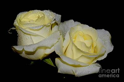 Photograph - Friendship Roses by Jeannie Rhode