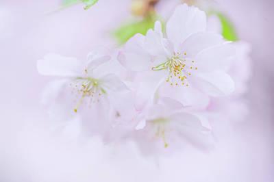 Photograph - Sweet Sensation. Spring Pastels by Jenny Rainbow
