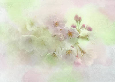 Cherry Blossoms Digital Art - Sweet Spring by Peggy Kahan