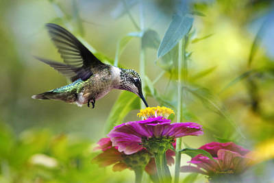 In Flight Photograph - Sweet Success by Christina Rollo