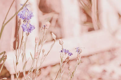 Photograph - Sweet Summer Flowers by Bonnie Bruno