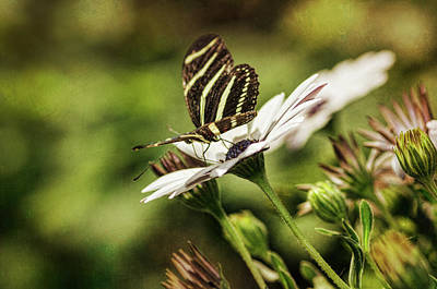Photograph - Sweet Summer Memoirs  by Saija Lehtonen