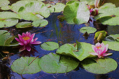 Photograph - Sweet Swamp Beauties by Kathy Clark